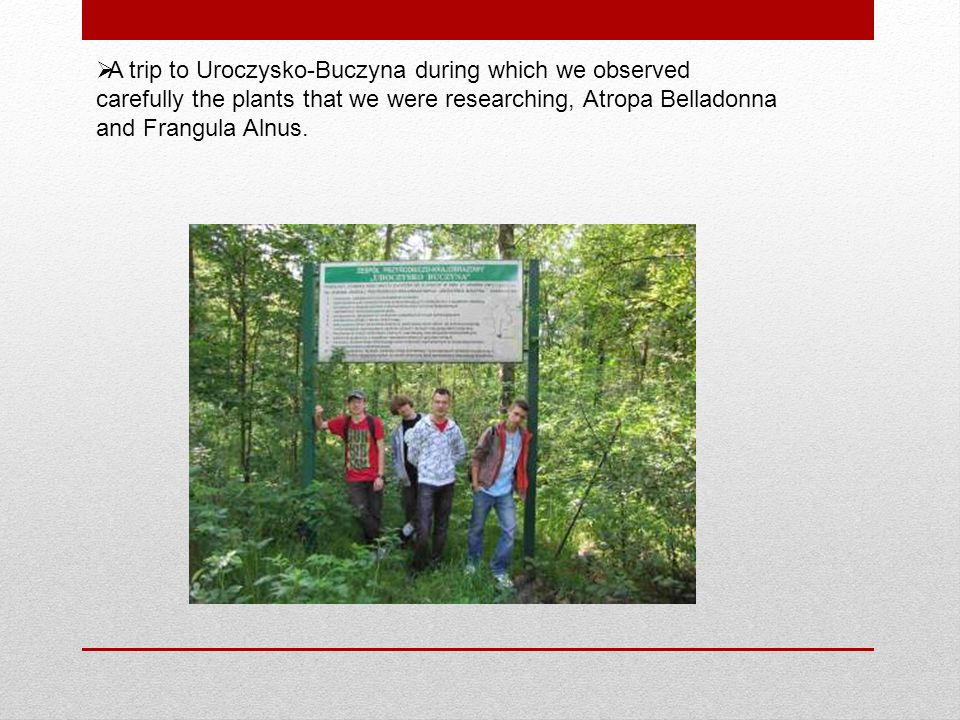 A trip to Uroczysko-Buczyna during which we observed carefully the plants that we were researching, Atropa Belladonna and Frangula Alnus.