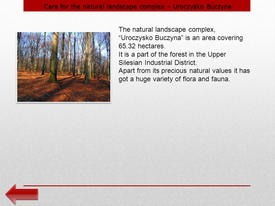 Care for the natural landscape complex – Uroczysko Buczyna The natural landscape complex, Uroczysko Buczyna is an area covering hectares.
