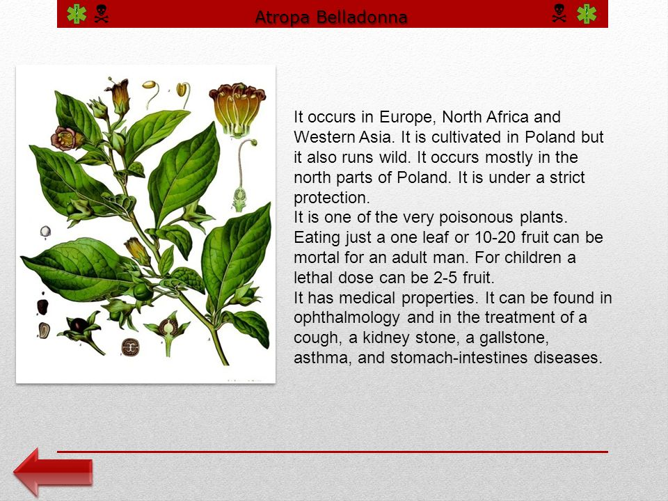 Atropa Belladonna It occurs in Europe, North Africa and Western Asia.