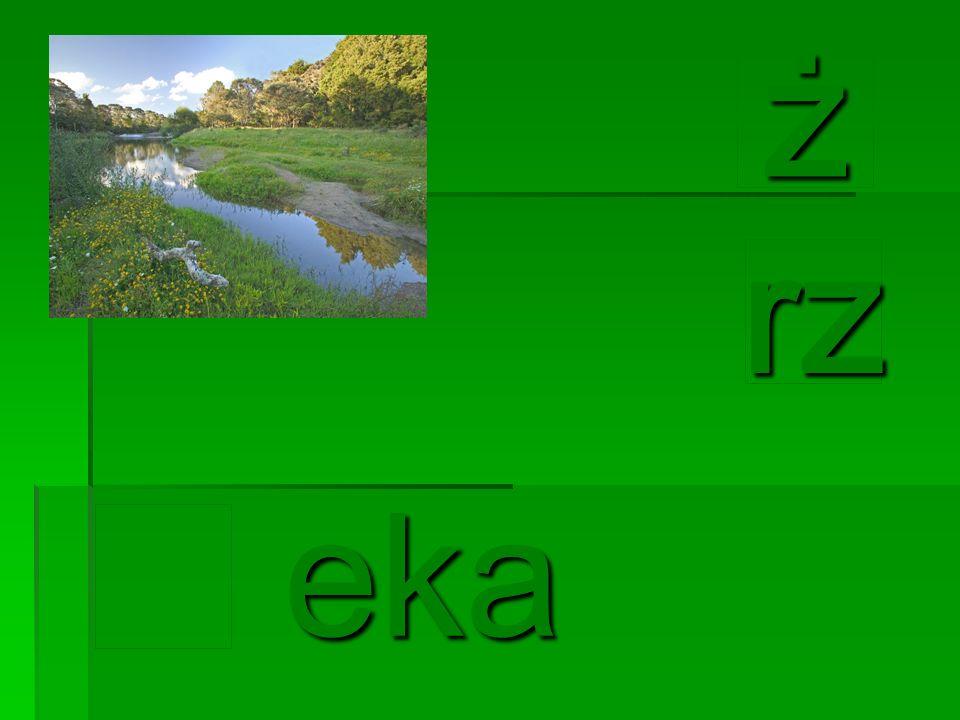 eka eka rz żżżż