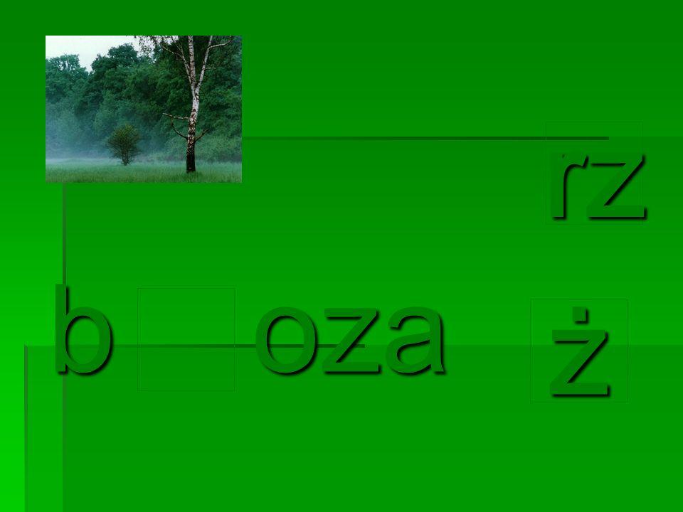 b oza żżżż rz