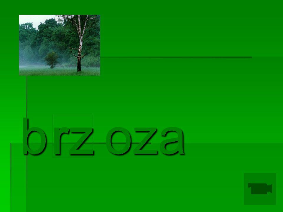 b oza rz