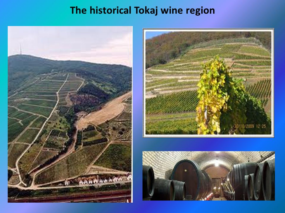 The historical Tokaj wine region