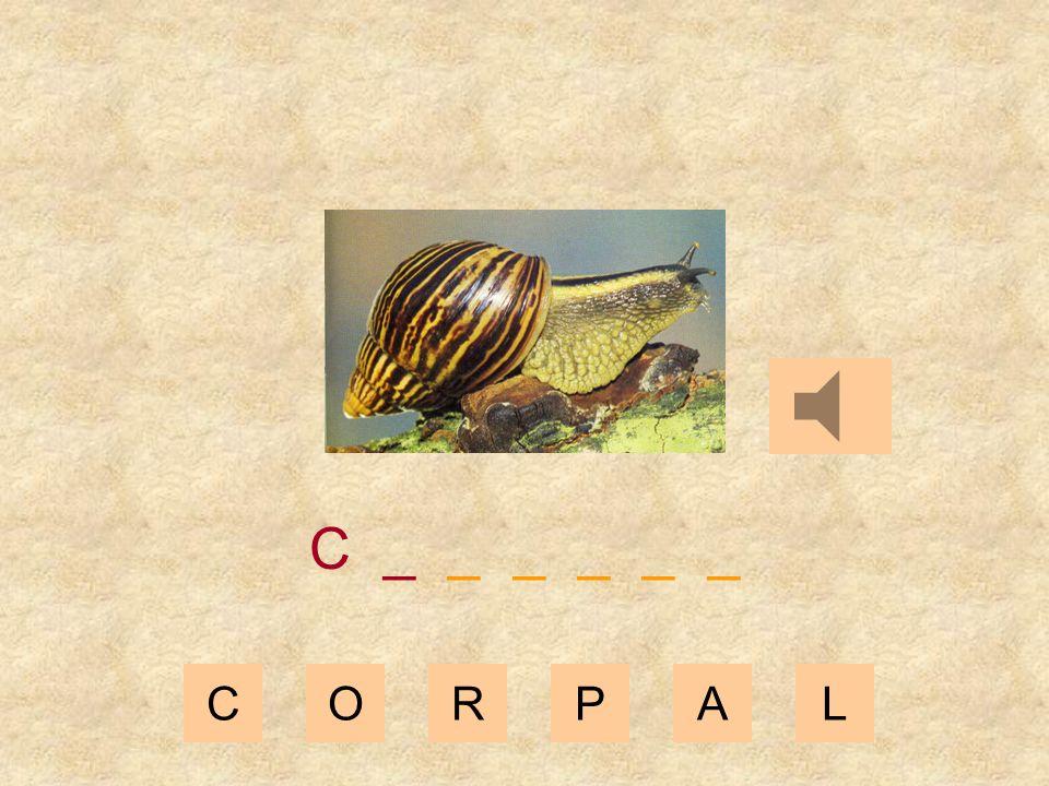 CORPAL _ _ _ _ _ _ _