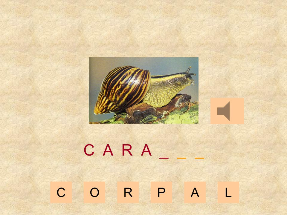 CORPAL C A R _ _ _ _