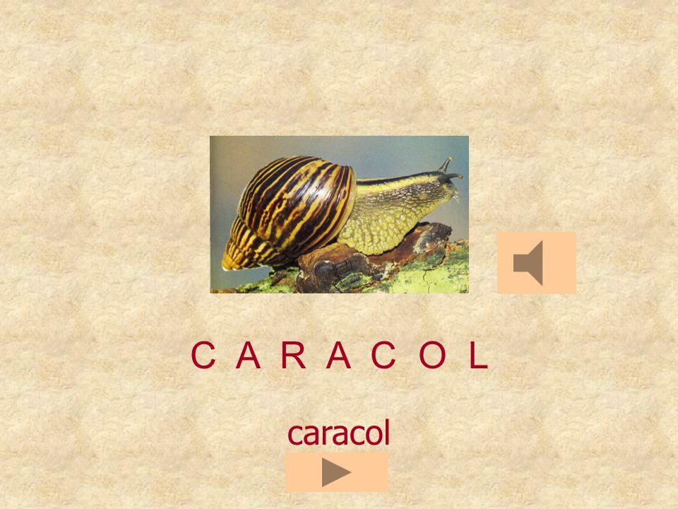 CORPAL C A R A C O _