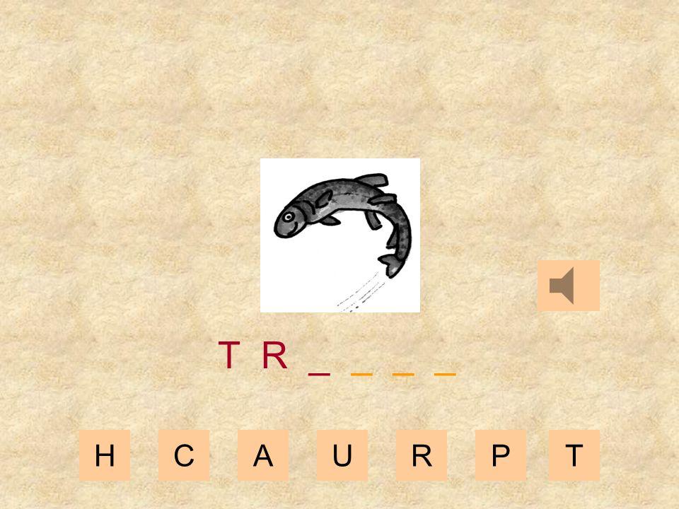 HCAURPT T _ _ _ _ _