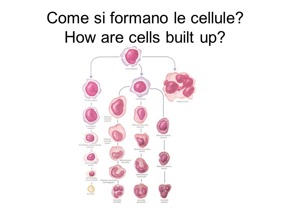 Come si formano le cellule How are cells built up