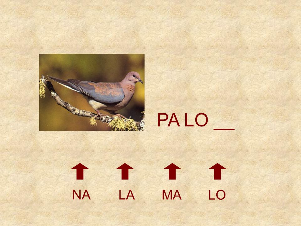PA __ __ NO LAMA LO