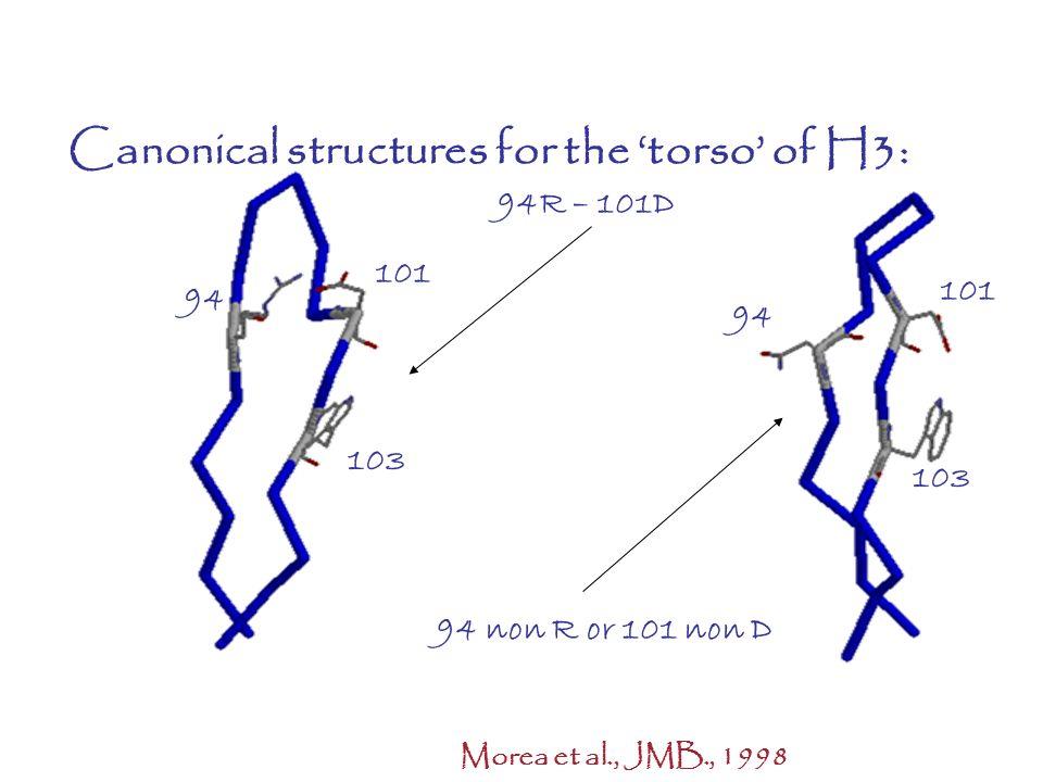 Canonical structures for the torso of H3: 94R – 101D 94 non R or 101 non D 103 94 101 103 94 101 Morea et al., JMB., 1998 ANTIBODIES: A different stor