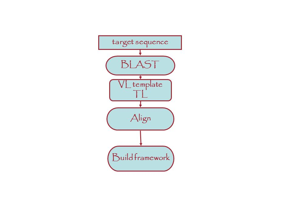 ANTIBODIES: A different story target sequence Build framework Align BLAST VL template TL