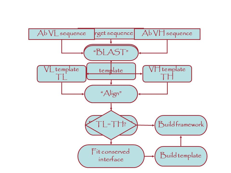 target sequence BLAST Align template Build framework ANTIBODIES: A different story Ab VL sequenceAb VH sequence BLAST VL template TL VH template TH Al