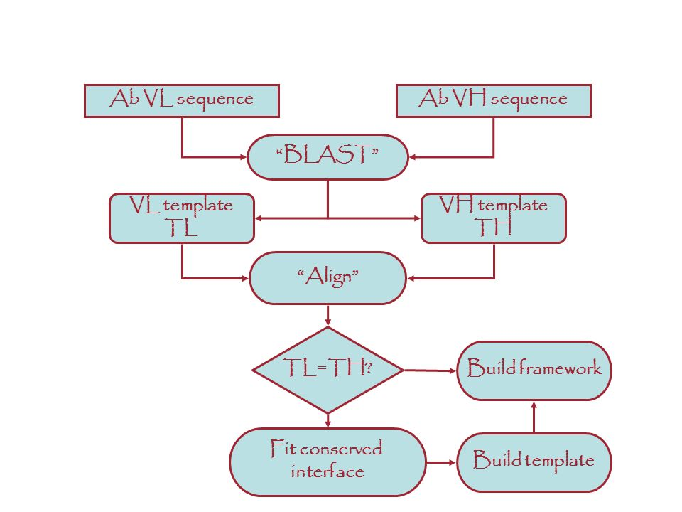 Align Ab VL sequenceAb VH sequence BLAST VL template TL VH template TH TL=TH? Fit conserved interface Build template Build framework ANTIBODIES: A dif