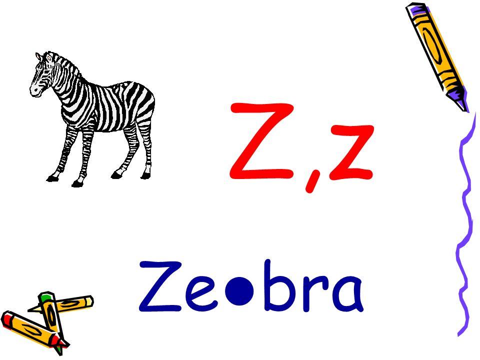 Z,z Ze bra
