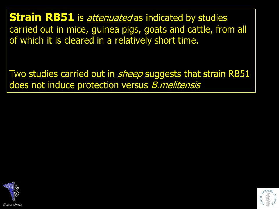 Strain RB51 is attenuated as indicated by studies carried out in mice, guinea pigs, goats and cattle, from all of which it is cleared in a relatively short time.