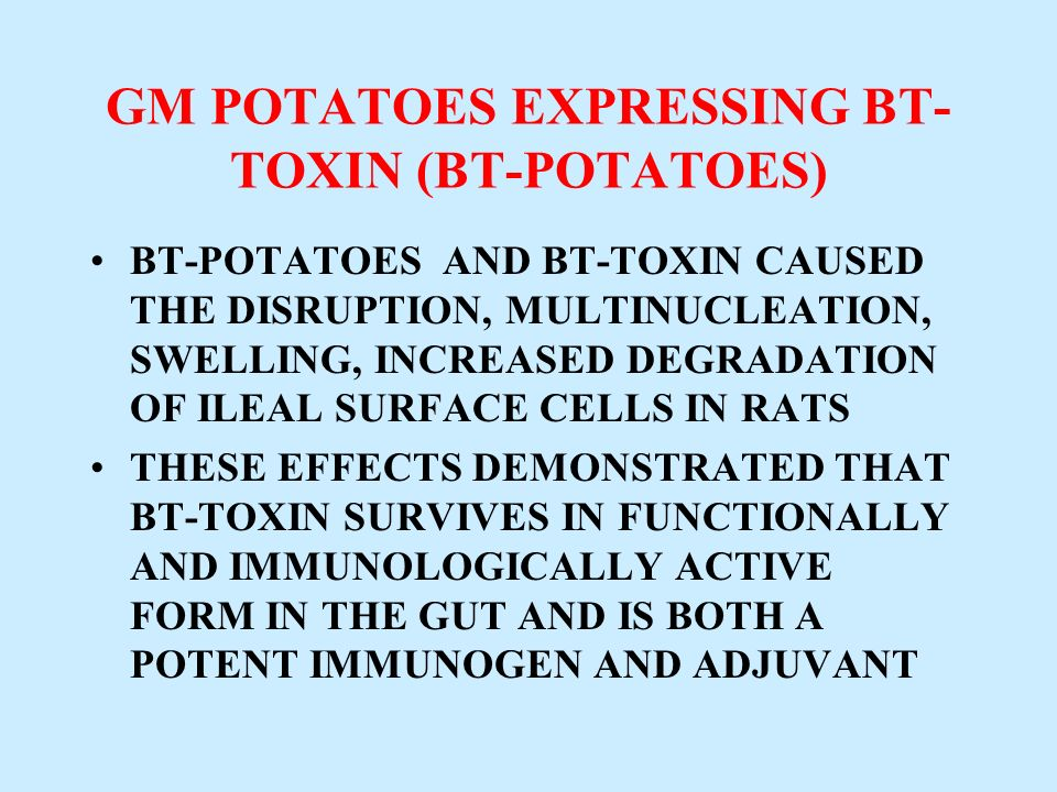 GM POTATOES EXPRESSING BT- TOXIN (BT-POTATOES) BT-POTATOES AND BT-TOXIN CAUSED THE DISRUPTION, MULTINUCLEATION, SWELLING, INCREASED DEGRADATION OF ILE