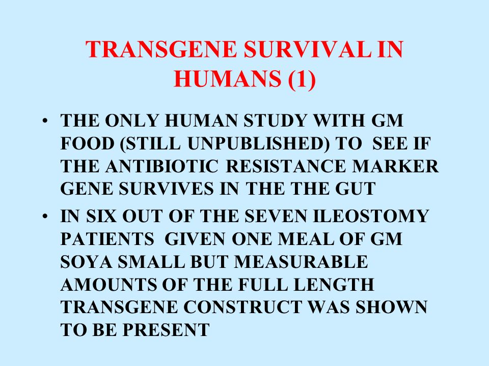 TRANSGENE SURVIVAL IN HUMANS (1) THE ONLY HUMAN STUDY WITH GM FOOD (STILL UNPUBLISHED) TO SEE IF THE ANTIBIOTIC RESISTANCE MARKER GENE SURVIVES IN THE
