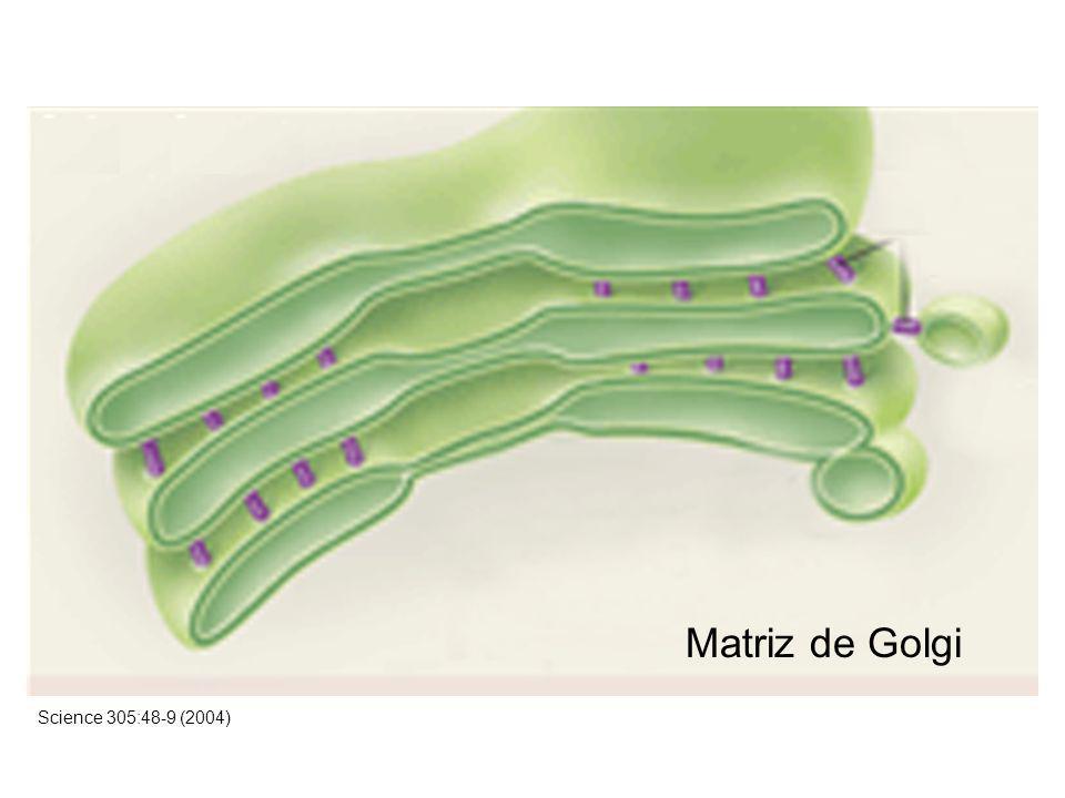 Matriz de Golgi Science 305:48-9 (2004)