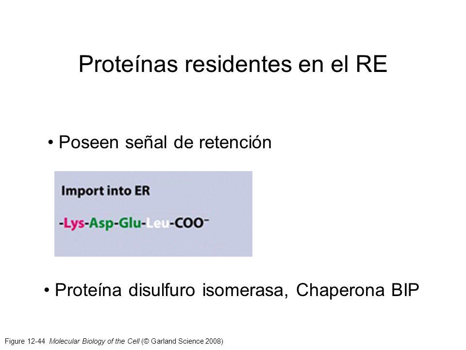 Figure 12-44 Molecular Biology of the Cell (© Garland Science 2008) Proteínas residentes en el RE Poseen señal de retención Proteína disulfuro isomera