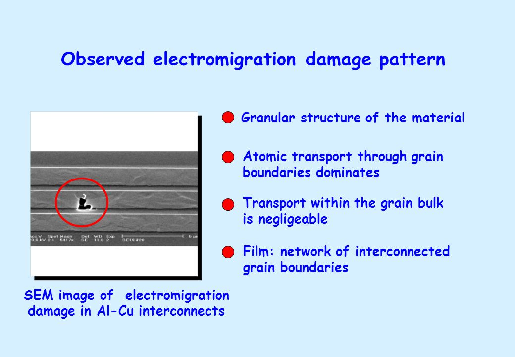 SEM image of electromigration damage in Al-Cu interconnects Granular structure of the material Atomic transport through grain boundaries dominates Tra