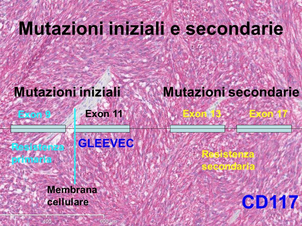 Mutazioni iniziali e secondarie Exon 9 Membrana cellulare Exon 11Exon 13Exon 17 Mutazioni inizialiMutazioni secondarie Resistenza secondaria CD117 Res