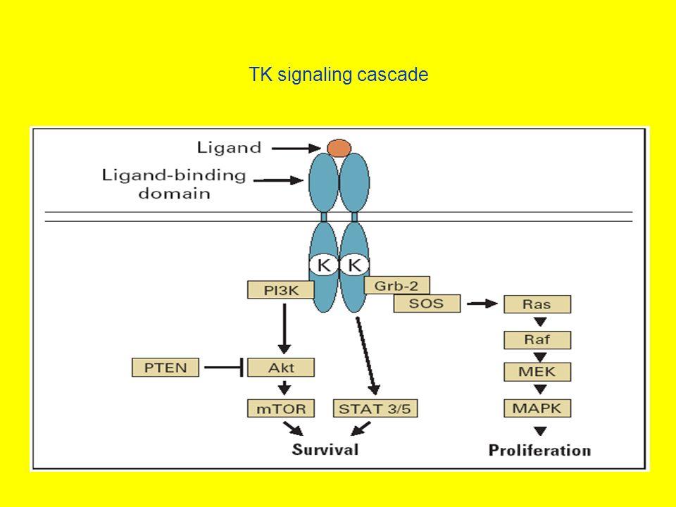 TK signaling cascade