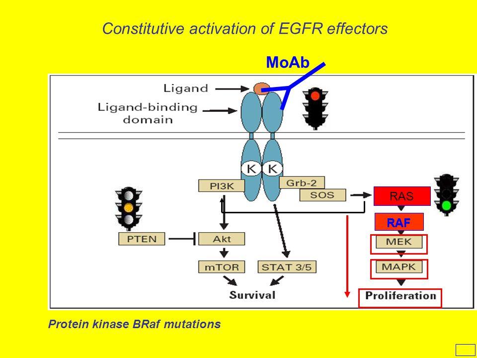 MoAb Protein kinase BRaf mutations RAF Constitutive activation of EGFR effectors RAS