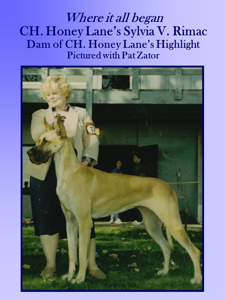 Where it all began CH. Honey Lanes Sylvia V. Rimac Dam of CH. Honey Lanes Highlight Pictured with Pat Zator