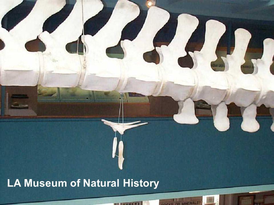 LA Museum of Natural History