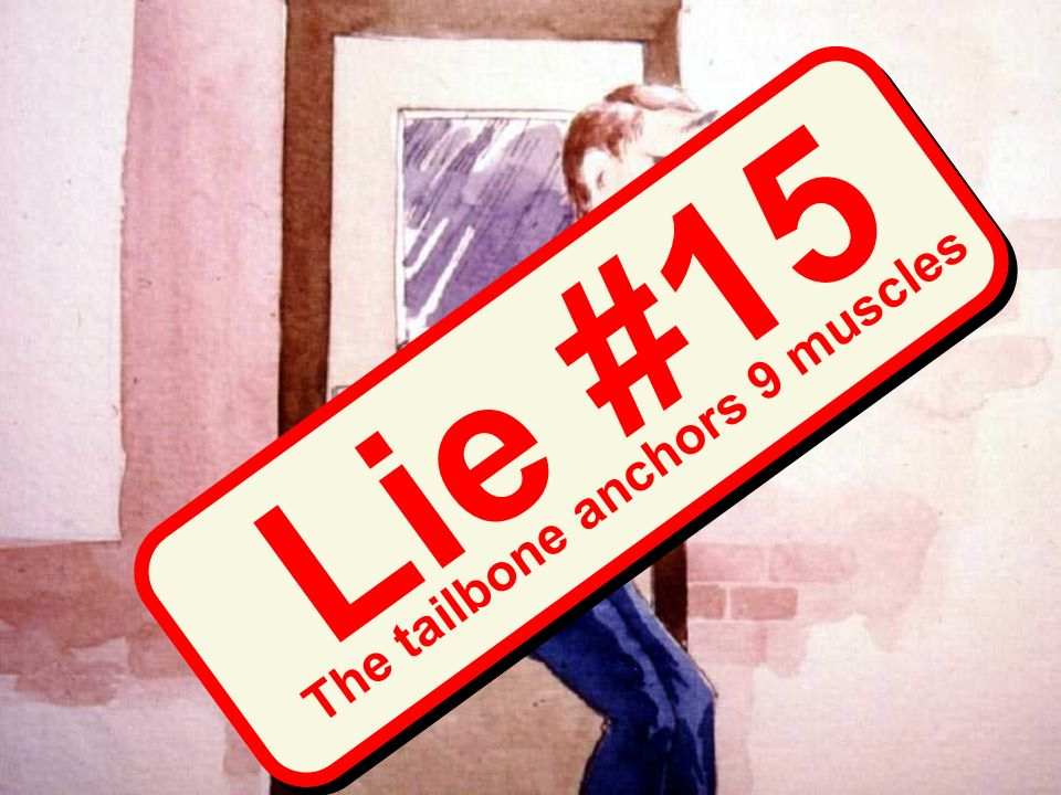 Prehensile tail (drawing) Lie #15 The tailbone anchors 9 muscles