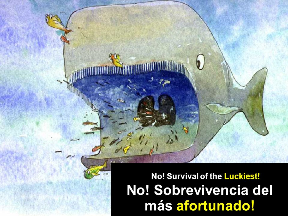Whale drawing () No! Sobrevivencia del más afortunado! No! Survival of the Luckiest!