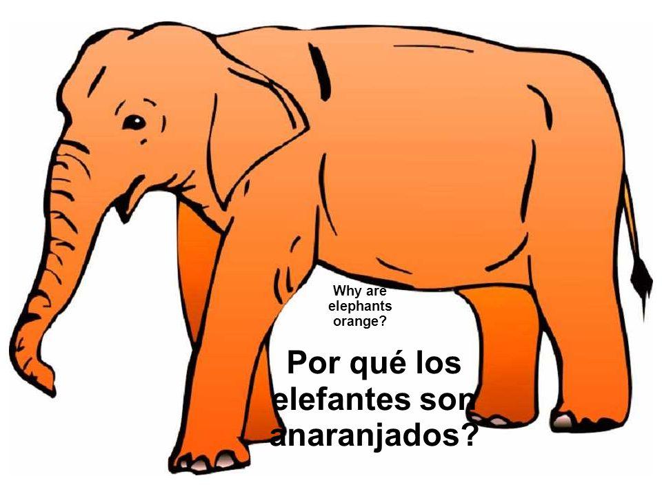 Why are elephants orange? Por qué los elefantes son anaranjados?