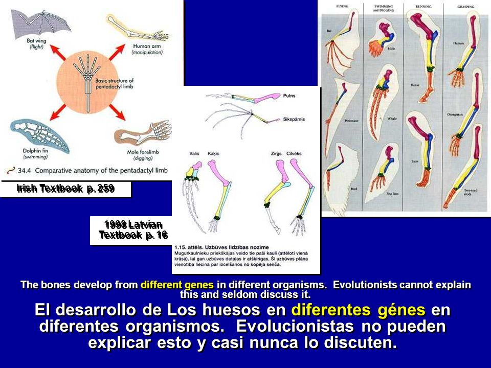 Irish Textbook p. 259 The bones develop from different genes in different organisms. Evolutionists cannot explain this and seldom discuss it. 1998 Lat