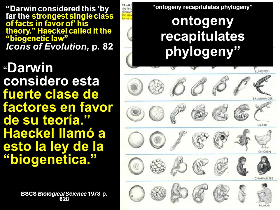 *** Embryology (several textbooks) BSCS Biological Science 1978 p. 628 Darwin considered this by far the strongest single class of facts in favor of h