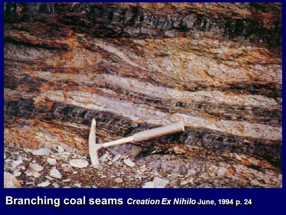 Branching coal seams Creation Ex Nihilo June, 1994 p. 24