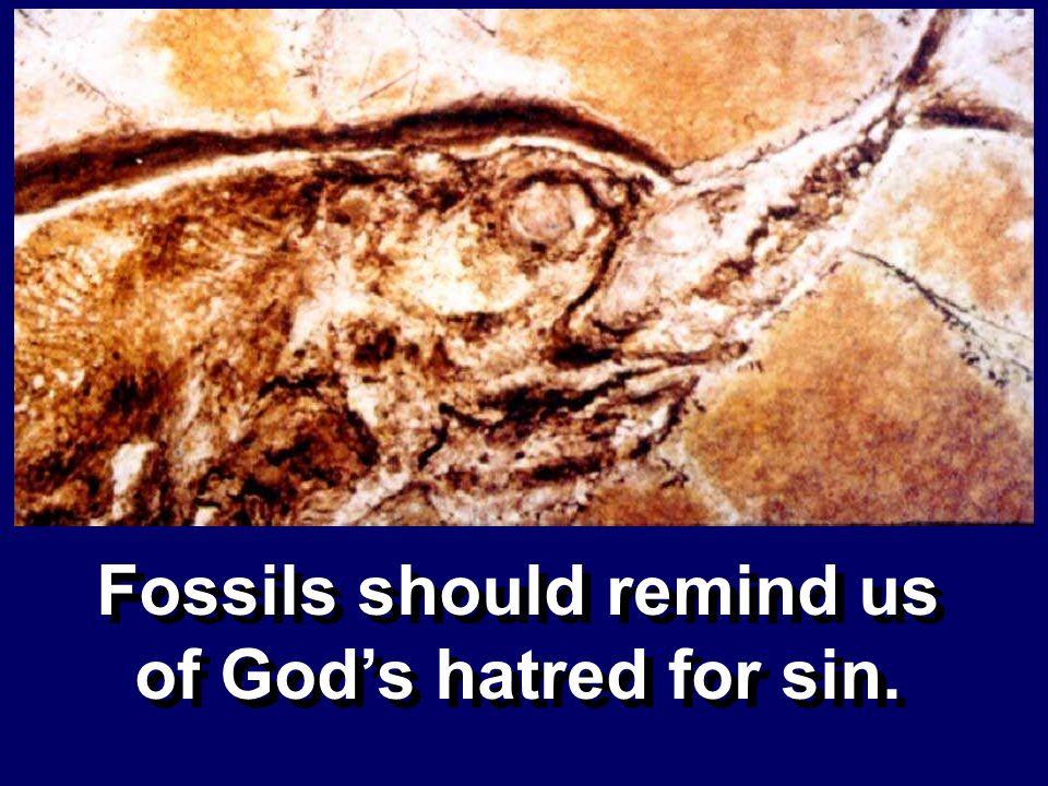 Fossils should remind us of Gods hatred for sin.
