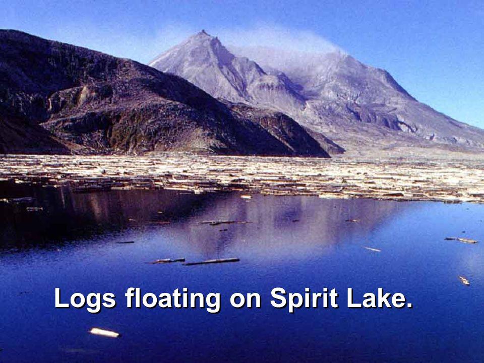 Logs floating on Spirit Lake.