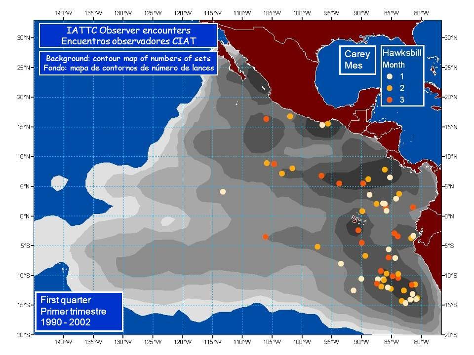 Carey Mes First quarter Primer trimestre 1990 - 2002 IATTC Observer encounters Encuentros observadores CIAT Background: contour map of numbers of sets Fondo: mapa de contornos de número de lances