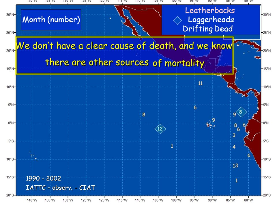 Leatherbacks Loggerheads Drifting Dead Month (number) IATTC – observ. - CIAT 1990 - 2002 We dont have a clear cause of death, and we know there are ot