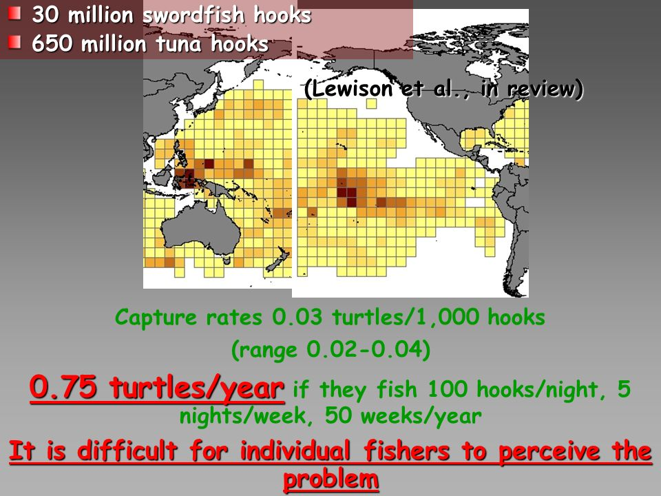 Capture rates 0.03 turtles/1,000 hooks (range 0.02-0.04) 0.75 turtles/year 0.75 turtles/year if they fish 100 hooks/night, 5 nights/week, 50 weeks/year It is difficult for individual fishers to perceive the problem 30 million swordfish hooks 650 million tuna hooks (Lewison et al., in review)
