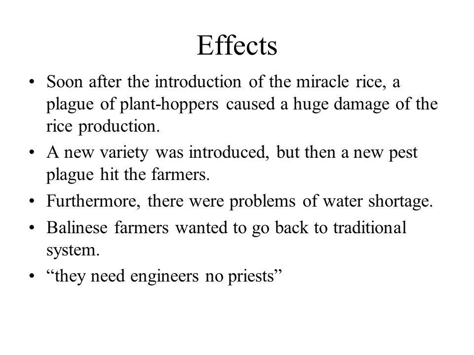 Effects Soon after the introduction of the miracle rice, a plague of plant-hoppers caused a huge damage of the rice production.