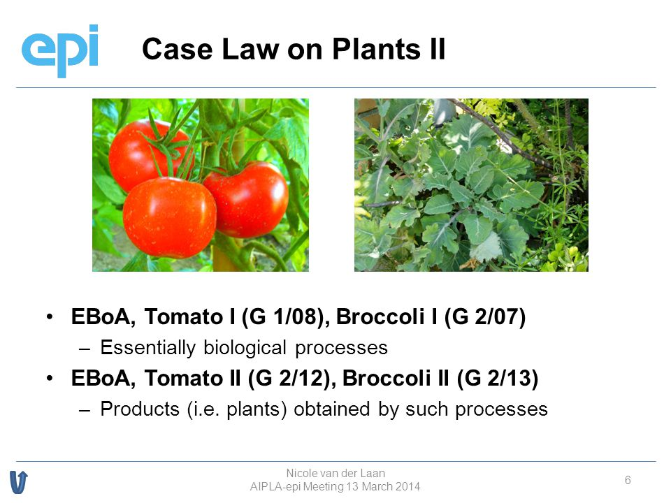 Case Law on Plants II 6 EBoA, Tomato I (G 1/08), Broccoli I (G 2/07) – –Essentially biological processes EBoA, Tomato II (G 2/12), Broccoli II (G 2/13) – –Products (i.e.