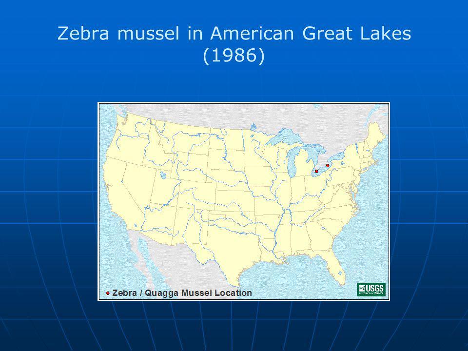 Zebra mussel in American Great Lakes (1986)
