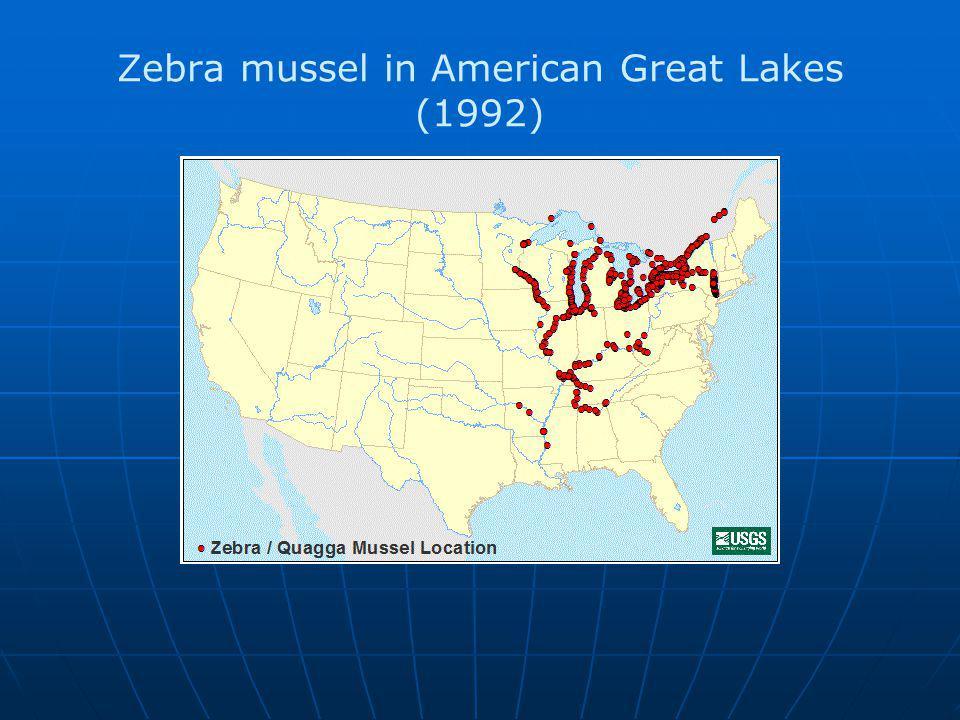 Zebra mussel in American Great Lakes (1992)