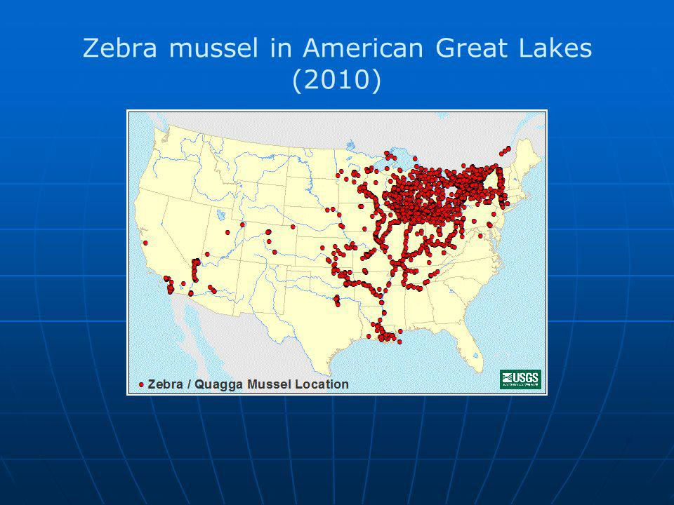 Zebra mussel in American Great Lakes (2010)