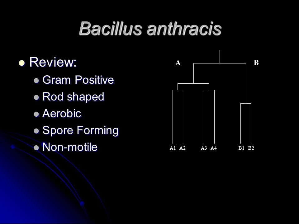 Bacillus anthracis Review: Review: Gram Positive Gram Positive Rod shaped Rod shaped Aerobic Aerobic Spore Forming Spore Forming Non-motile Non-motile AB A1 A2 A3 A4 B1 B2