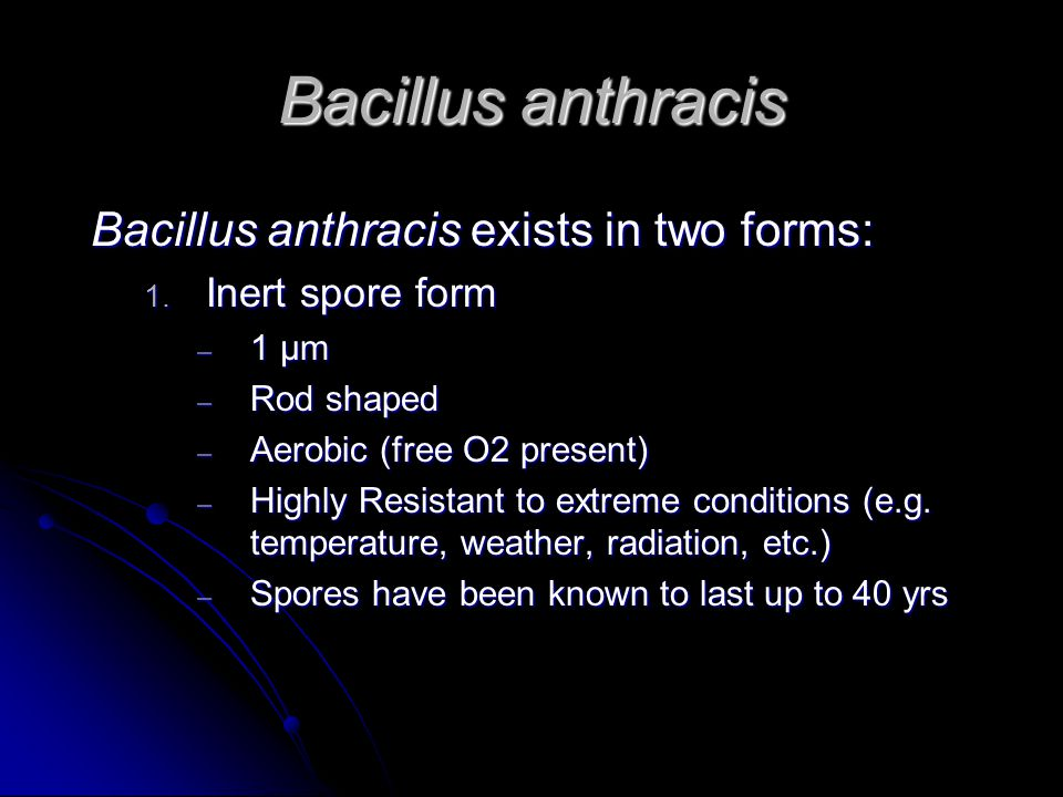 Bacillus anthracis Bacillus anthracis exists in two forms: 1.