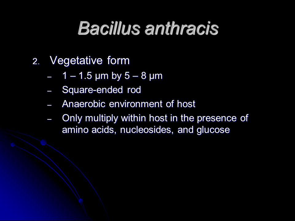 Bacillus anthracis 2.