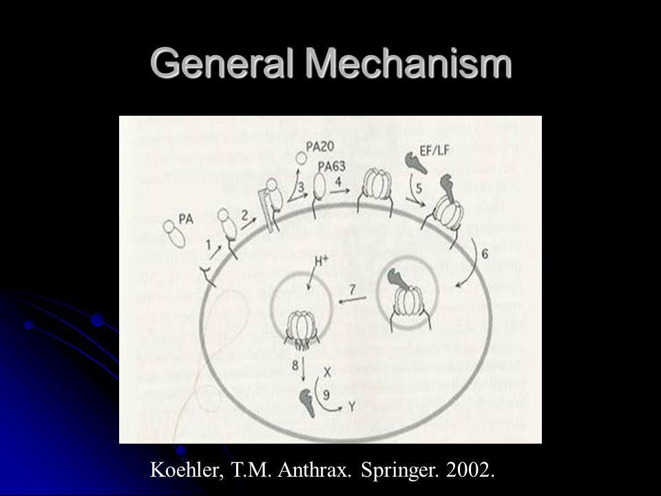 General Mechanism Koehler, T.M. Anthrax. Springer. 2002.