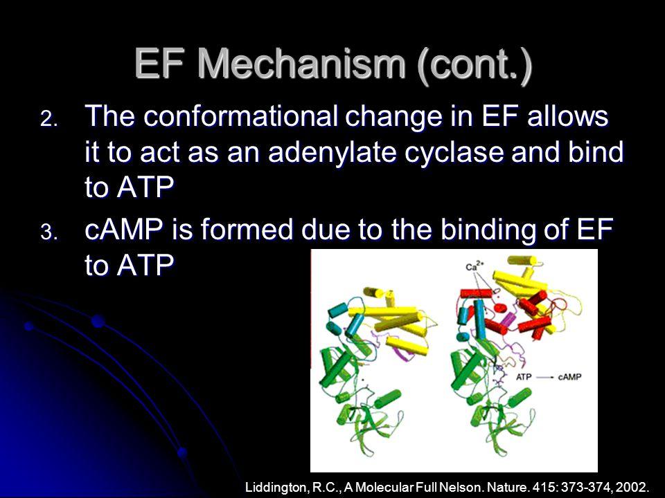 EF Mechanism (cont.) 2.